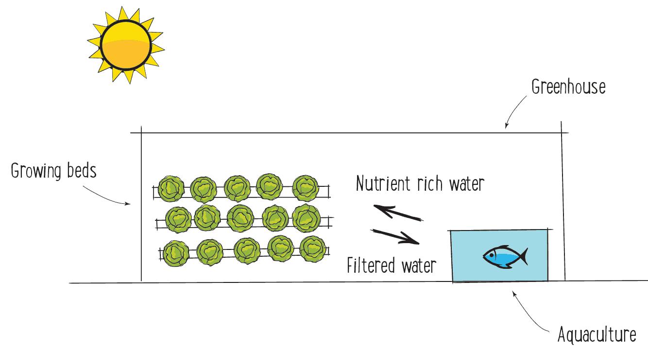 Aquaponics-Explained-copy